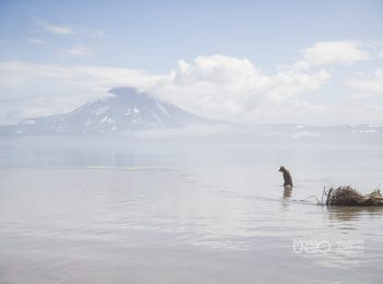 The Land of Bears and Volcanos
